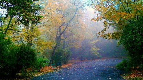 Jesienny poranek w parku 1