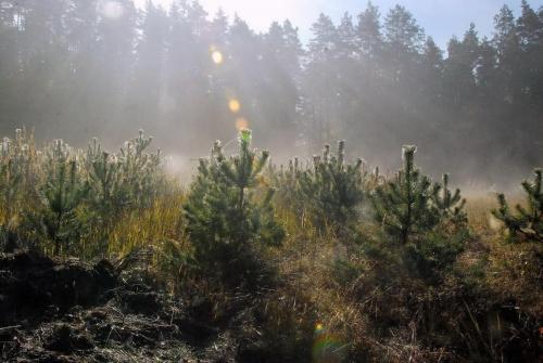 Minął sierpień, minął wrzesień, znów październik i ta jesień rozpostarła melancholii mglisty woal (Jeremi Przybora) #jesień #kolory #mgła #przyroda