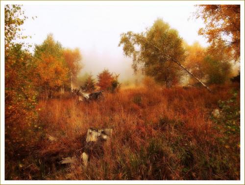 Widok ze Srebrnej Drogi (szlaku fioletowego) z Przełęczy Walimskiej na Przełęcz Sokolą #DolnyŚląsk #drzewa #flora #góry #GórySowie #jesień #las #PrzełęczSokola #PrzełęczWalimska #SrebrnaDroga #Sudety #SzlakFioletowy #WielkaSowa