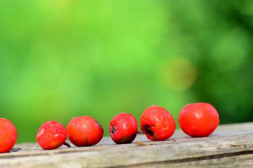 czerwone koraliki