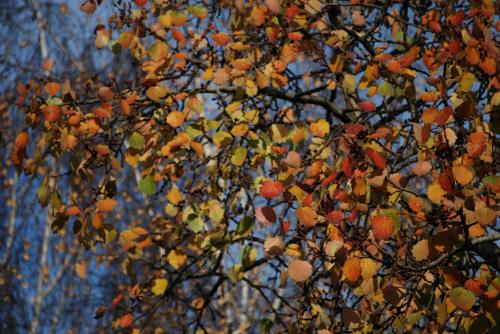 Kolory jesieni na osice