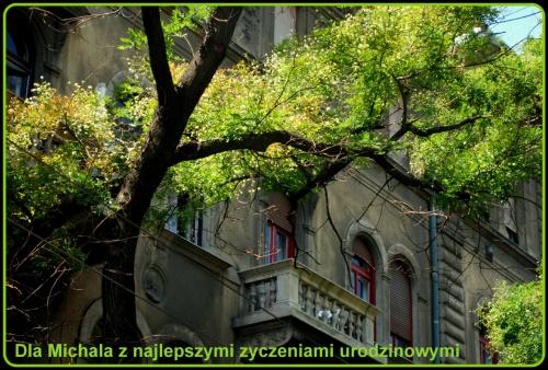 Dla Michała98 pocztówka z Budapesztu i kwiaty na drzewach :)