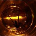 I - Gwiezdne wrota #GwiezdneWrota #DomoweInspiracje #pająk
