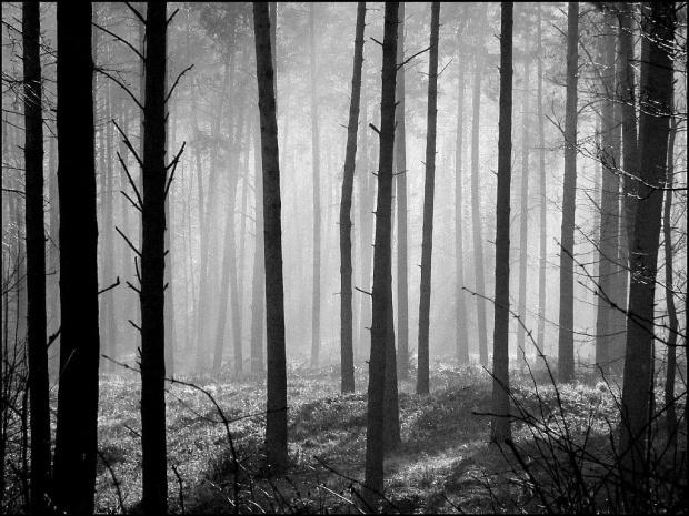 W zimowym lesie...bez śniegu...