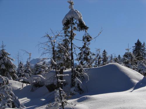 Zima w Tatrach #mróz #Tatry #zima