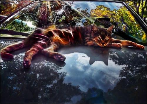 a dzisiaj Światowy Dzień Kota i z tej okazji kot dostał prezent #koty #zwierzęta
