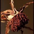 Dzika róża #DzikaRóża #krzew #kwiat #owoc