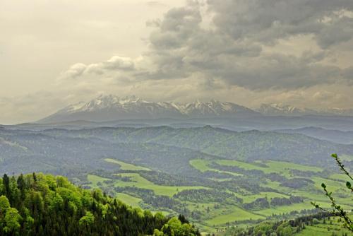 parę lat temu w Pieninach... ( widok z Wysokiej na Tatry )