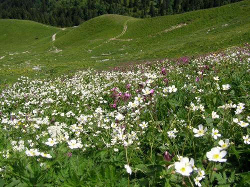 W Alpach, czerwiec 2009