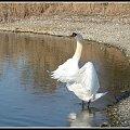 jezioro,woda,ptaki,zwierzeta #ptaki #woda