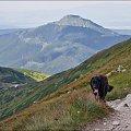 samotny pies- turysta :) #góry #Lipiec2013 #Tatry #TatryZachodnie
