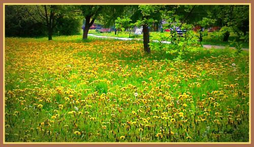 Wiosenna impresja