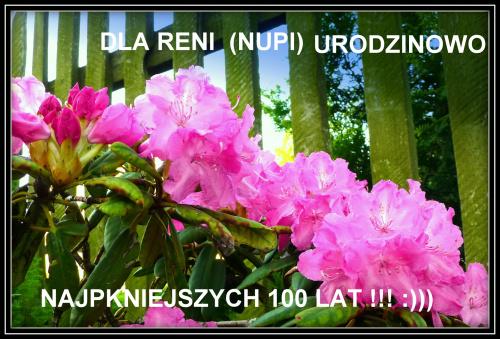 Kochana Reniu, wszystkiego najlepszego i wielu pięknych spotkań z bociankami :)))