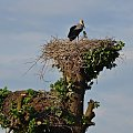 mieszkanie dwupokojowe :) #ptaki #bociany