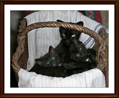 portret rodzinny #koty #zwierzeta