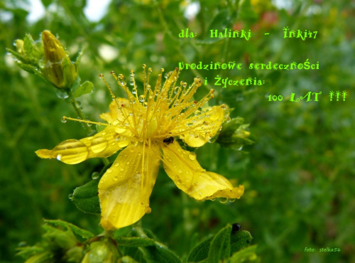 Radośnie, radośniej, najradośniej żyj jak tylko potrafisz, a prosto, prościej, najprościej do szczęścia trafisz ... marzenia są piękne i krążą wokół nas , niech zawsze się spełniają i szczęście Tobie dają !!! 100 LAT !!! **** ulub. inka47 **** #kwiaty