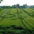 po burzy ... #lato #PoBurzy #pola #przyroda #pszenica #zboże