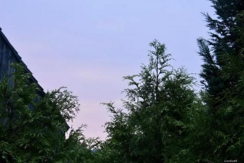 lipcowy świt #lato #ogród #przyroda