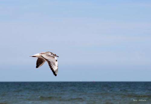 wakacje ... urlop ... plaża ... Sarbinowo, które głowy nie urywa , ale ? :) pozdrawiam Was kochani :) ... **** ulub. videll **** #morze #plaża #urlop #wakacje