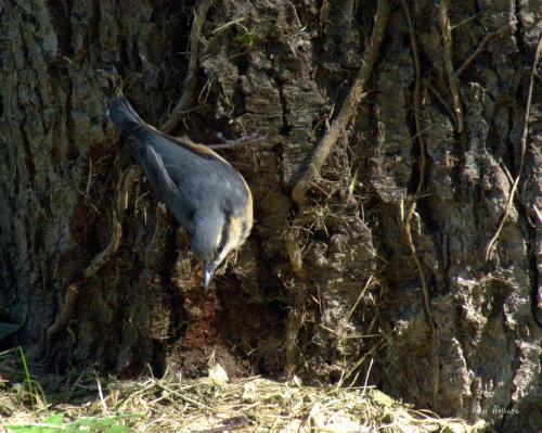 kowalik ... #kowaliki #park #ptaki #StrzelceOpolskie