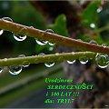 Życzę Ci marzeń wielkich i odważnych i odwagi by je spełniać :) #jesień #krople #PoDeszczu #urodziny #życzenia