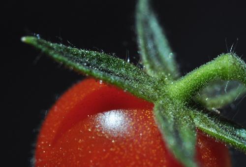 Pomidorek :)