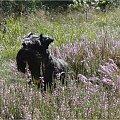Jesień #grzyby #jesień #Mazury #pies #żagle