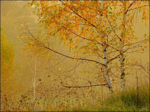 Jesień bywa ... piękna :)