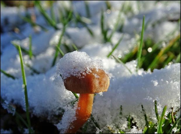 Pierwszy śnieg zawsze cieszy najbardziej ...