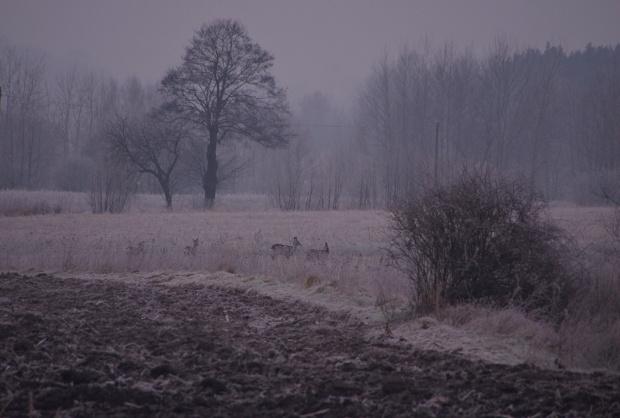 #pola #Styczeń2015 #zima
