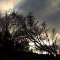 ... zachodni wiatr ... #drzewa #wiatr #wydmy