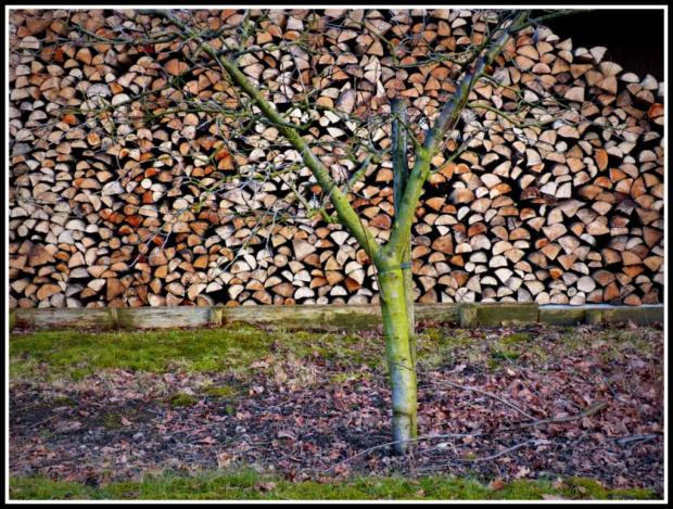 mlode drzewko i stare drewno a moze duzo listkow #przyroda