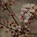 #Wiosna2015 #Kwiecień2015 #natura #przyroda #kwiaty