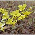 zolte kwiatki #przyroda