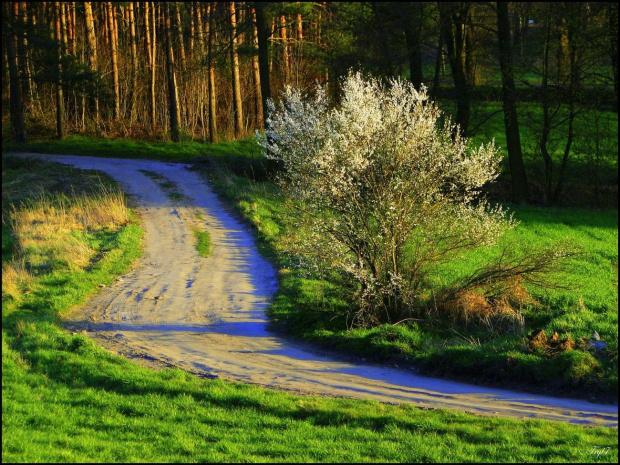Wiosna rządzi :)
