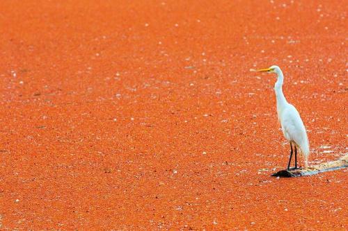Gdzie ta woda? #przyroda #ptaki #woda
