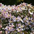 ogród mój, azylem moim ... #działka #kwiaty #ogród #wiosna