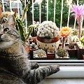 Portos i Echinopsisy #kaktusy