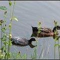 nad wodą-parka #przyroda